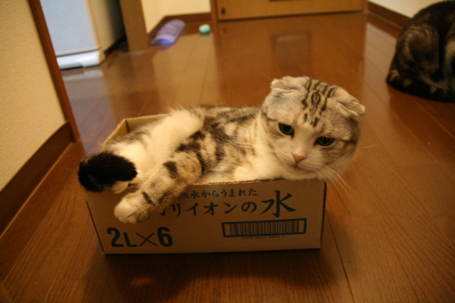 Tokoharu10759