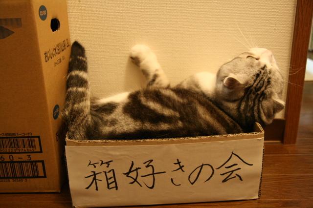 Tokoharu11031
