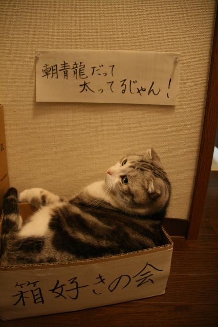 Tokoharu11037
