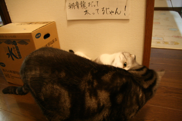 Tokoharu11046