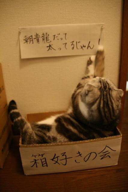 Tokoharu11053