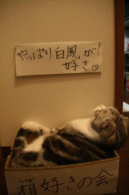 Tokoharu11056