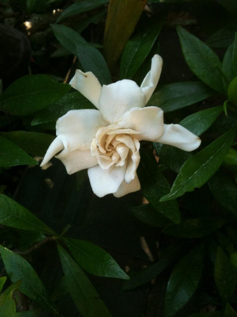 庭の花 3